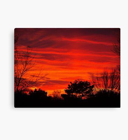 Burning Bushes Canvas Print