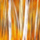Impressions of Birch by Angela King-Jones