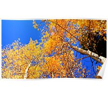 Fall Tops Poster