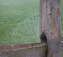 Spider web on split rail fence by purplefoxphoto