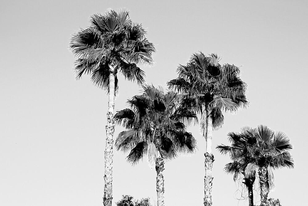 sky high palms by sarahb03