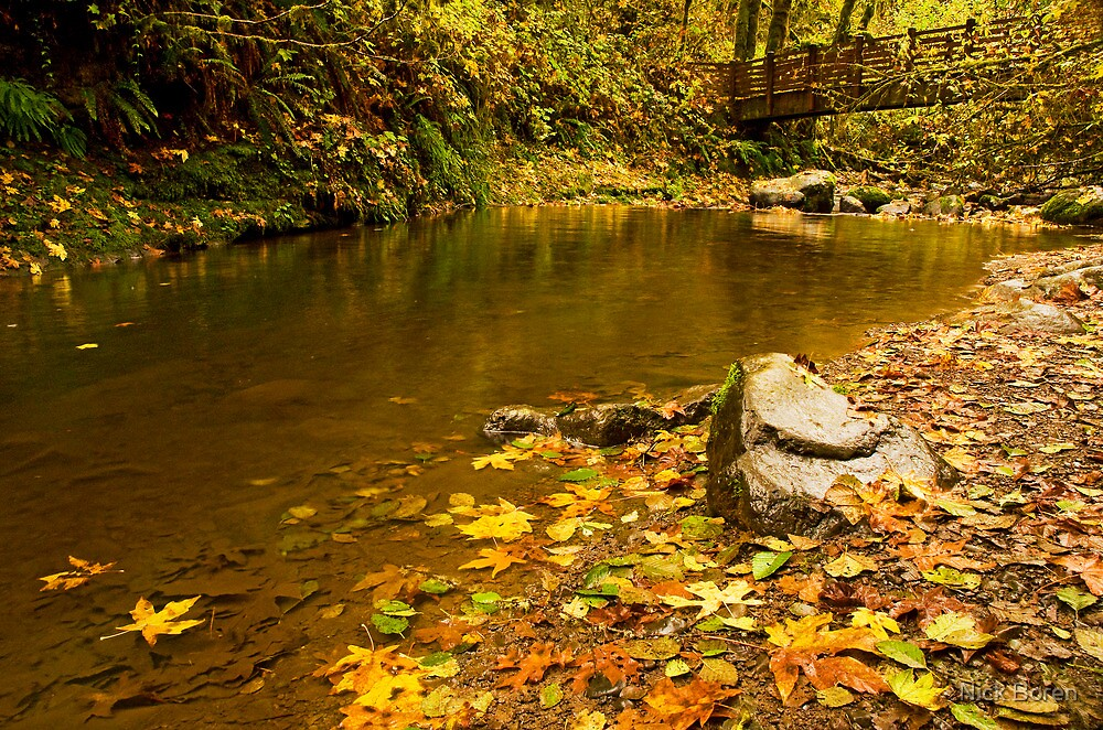 McDowell Creek Landscape by Nick Boren