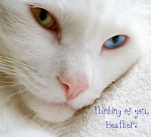 Thinking of you, Heather by Scott Mitchell