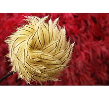 Feathery Finesse Photographic Print