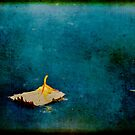 Floating by Lynnette Peizer