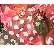 Hidden Pink Photographic Print