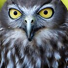 Barking Owl by Renee Hubbard Fine Art Photography