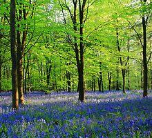 Bluebells by Ian Jones