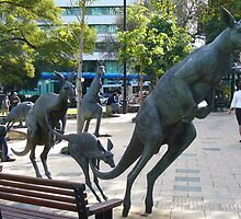 Kangaroos in downtown Perth, Western Australia by DashTravels