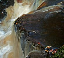 Leaf fall on the River Calder by Keith Gooderham