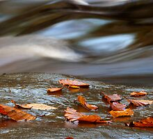 Fallen beech leaves soon to be gone by Keith Gooderham