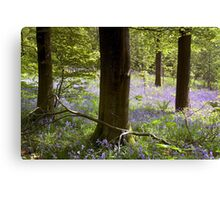 Bluebells in Clapdale Wood - The Yorkshire Dales Canvas Print