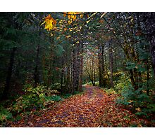 The Old Country Road Photographic Print