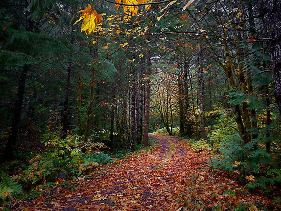 The Old Country Road by Charles & Patricia   Harkins ~ Picture Oregon