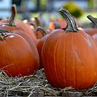 Pumpkins at Vollmer Farms by Sue McGlothlin
