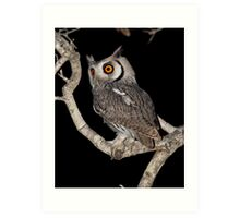 Southern White Faced Owl Art Print