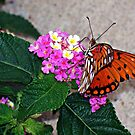 Sipping Lantana by DionNelson