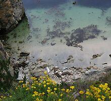 Pt. Lobos Cove by teresalynwillis