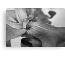 subdued iris Canvas Print