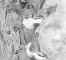 Nuthatches by Llynfian