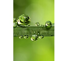 Gloriously Green Photographic Print