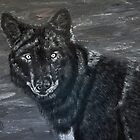 Black wolf  by maggie326
