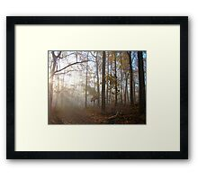 The Autumn Woods Awaken Framed Print