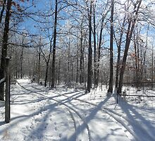 Tis The Season by NatureGreeting Cards ©ccwri