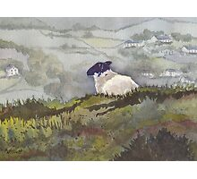 Peaceful Overlook (sheep series 5) Photographic Print