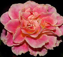 Shades of pink by ♥⊱ B. Randi Bailey