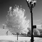 Urban Tree by © Joe  Beasley IPA