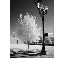 Urban Tree Photographic Print