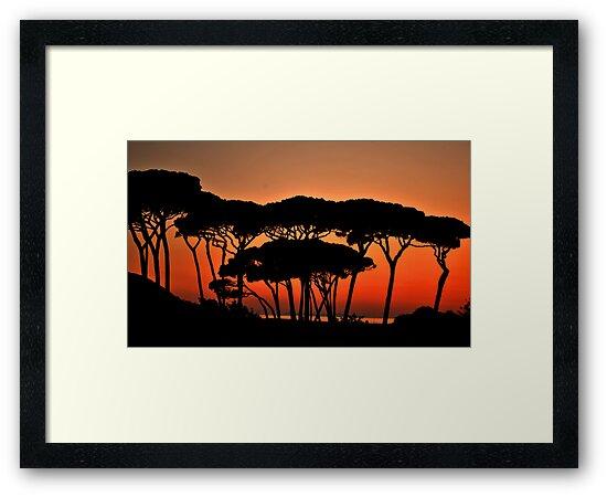 Beautiful tree silhouette by Neha Singh