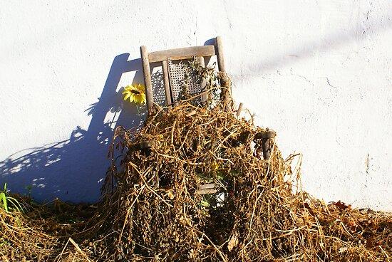 Cane Back Chair & Sunflower by Annlynn Ward