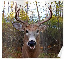Wide-Angled Buck Poster