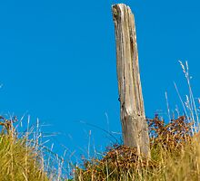 Landscape, Fence post, Desiccated, Sand Dunes, Blue sky by Hugh McKean