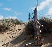 Landscape, Fence Posts, Desiccated, Sand dunes, by Hugh McKean