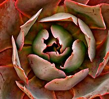 succulent  by Jessica Karran