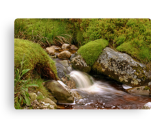 A Wicklow Stream Canvas Print