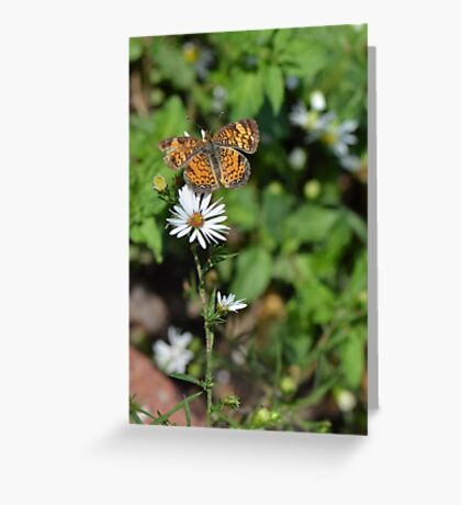 Pretty Little Orange Butterfly on White Flower Greeting Card