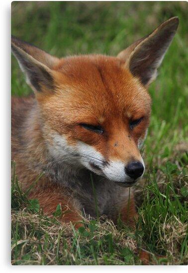 Sly fox by yampy