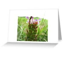 Hover Fly on Heal All Greeting Card