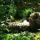 Cheetah by Zoe Toseland