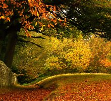 An array of autumn colours.... by wigs