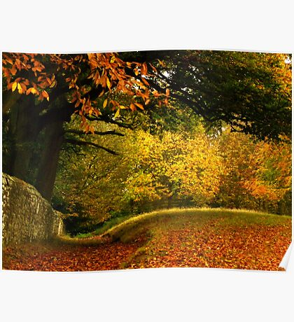 An array of autumn colours.... Poster