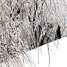 nice as ice by sarahb03