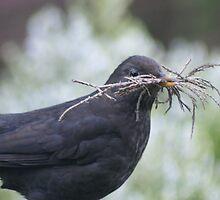 Wing Commander Blackbird by pix-elation