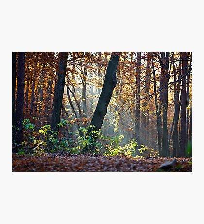 Views: 872 ★★★★★ . Have You Ever Seen the Paradise ?  God Bless Love of Life & Autumn Amen ! Dedicated to Love & Phil Collins - Another Day in Paradise. Пусть Бог не последний, СПАСИБО ! Photographic Print