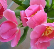 fucia tulips by Jeannine de Wet
