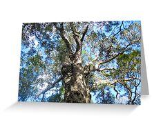the Big Tree Greeting Card